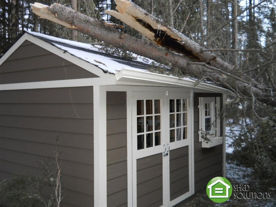 Featured Shed - Week of December 3, 2012